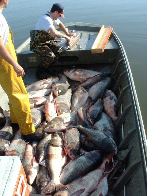 asian carp invading the great lakes The us house approved a $300 million budget to help restore the great lakes, which are still being impacted by the unpredictable presence of invasive species.