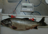 Fisheries Research